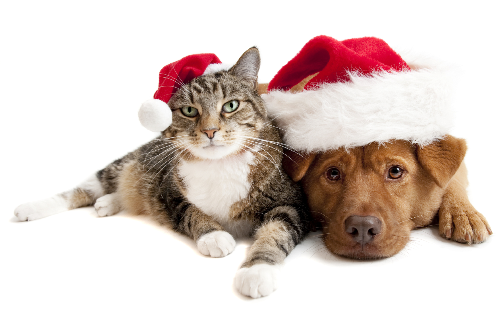 Christmas Appeal , Pets Of The Homeless Australia