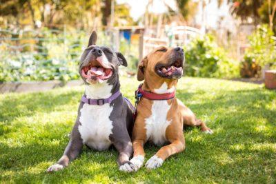 Sally and Roxy