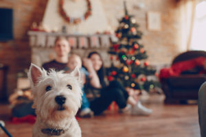Cute cheerful family, dog in the foreground, happy parents with baby celebrate New Year holiday